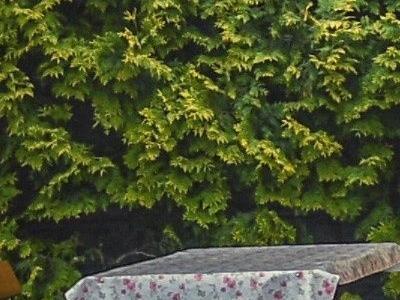 Stół i drzewa 01